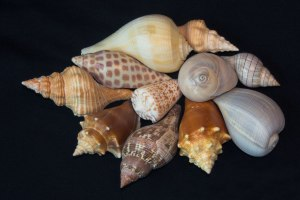 Judy's-Shell-Collectionresi