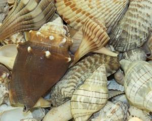 Shell Museum Lucky Dip 10x8